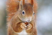 Animaux écureuils, tamias / Ecureuils