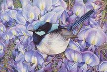 Peintre (Heidi Willis) / Faune (oiseaux) et flore