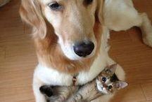 Amitié / Amitié entre des animaux  Amitié entre chien et chat, inspiré par un blog