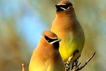 Bird Watcher / beautiful #birds #birdwatchers #birdlovers #birdwatching inspiration
