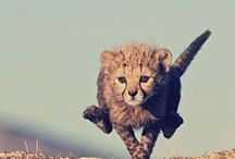 Fauna-Land / Land animals, cool creatures and cool photography. / by Dani Eide