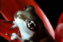 Amphibians Are Great / What's not to like? So interesting, colourful too