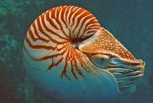 Mollusc Magic / by Catherine Jamieson