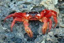 Crabby Crustacians / by Catherine Jamieson