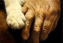Hands / by Catherine Jamieson