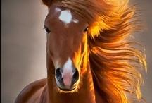 Horse / by Catherine Jamieson