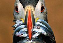 Shetland Birds+Wildlife / by Catherine Jamieson