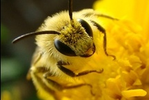 Just Bee / by Catherine Jamieson