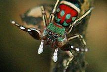 Awesome Arachnids / by Catherine Jamieson