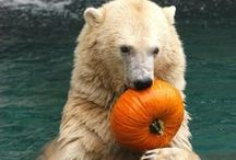 Brave Bears / by Catherine Jamieson