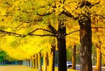 Yellow is / #yellow