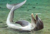 Dolphins at Play / by Catherine Jamieson