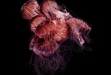 "inspiration: PHOTOGRAPHY: GUIDO MOCAFICO: ""JELLYFISH"""