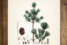 Botanical / by Katherine Moes