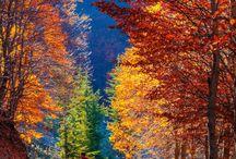 Árvores / Árvores