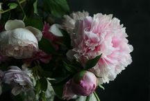 FLOWERS + GREENS