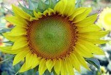 My Favorite Flowers / Veggie gardeners appreciate beauty, too!