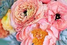 Floral Arrangements / by Nicola Hall