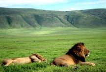 Ngorongoro / Photos and videos taken in the impressive Ngorongoro Crater and Highlands in Tanzania. All photos and videos uploaded from our account are were taken by Thomson Safaris' guests while on safari. / by Thomson Safaris