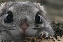 Squee-Worthy Critters