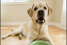 Pet Care Tips for Managing the Menagerie / Pet care articles including pet care tips and ways to save money on your cats, dogs, and other pets.