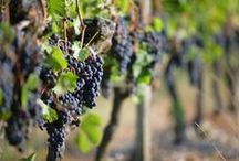 Visit French Wine / https://www.visitfrenchwine.com/