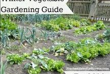 One Determined Gardener / Gardening tips and tutorials. / by Alea Milham   Premeditated Leftovers