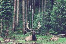 Forest&Deer / forest landscape, animals, wood