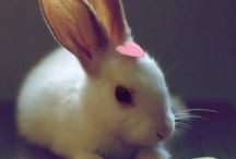 Bunnies / by Ze Kaycee