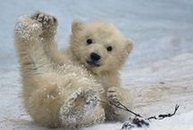 Animal Love / All animals are beautiful.