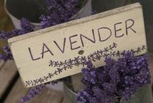 Lavendar / by Shelly Dove