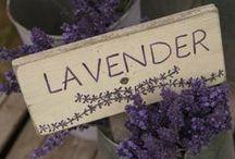 Lavendar / by Shelly Dove