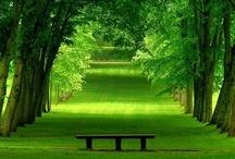 Outdoor Spaces / Gardens, gardening, outdoor living spaces.