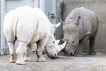 Albino & White Animals