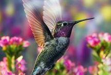 I love Humming birds / by Laura Dupaix