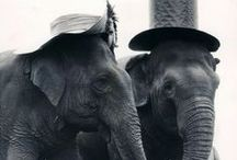 Love: Elephants <3