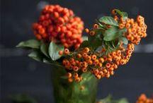 foliage + flowers / by alyssa riegert / olive