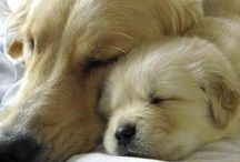 Puppy Love / There is no psychiatrist in the world like a puppy licking your face.  ~Ben Williams / by Beverly Cooper