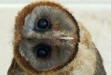 Bird photos! / by Susan O.