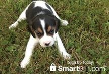Pet Safety / Tips and tricks to keep your dogs, cats and all your #pets safe, happy and healthy. / by Smart911