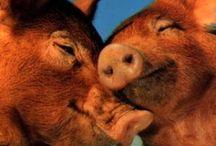 Piggy / by Susan O.