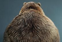 The Bear / by Susan O.