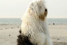 Love: Pups <3