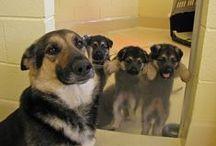 Puppy love / by Susan O.