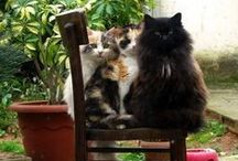 Norwegian Forest Kitties / by Susan O.