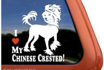 Chinese Crested's / by Cynthia Jensen