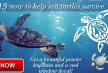 Environment / Save the planet, oceans and Turtles! / by TRI AIR Testing