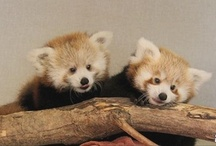 Irresistibly cute animals / by WTSP 10 News