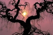 Tremendous Trees / by Pam Widener