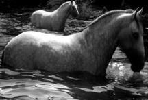 Equus / by Pam Widener